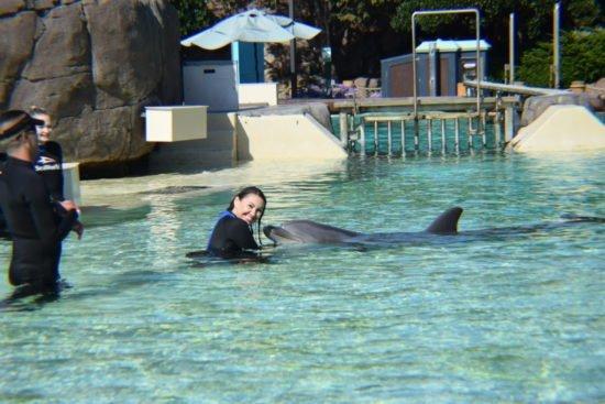 Dolphin Encounter Seaworld