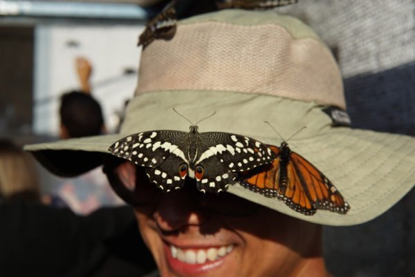 A Gallery of all the Fun & Food from This Years OC Fair Visit 7