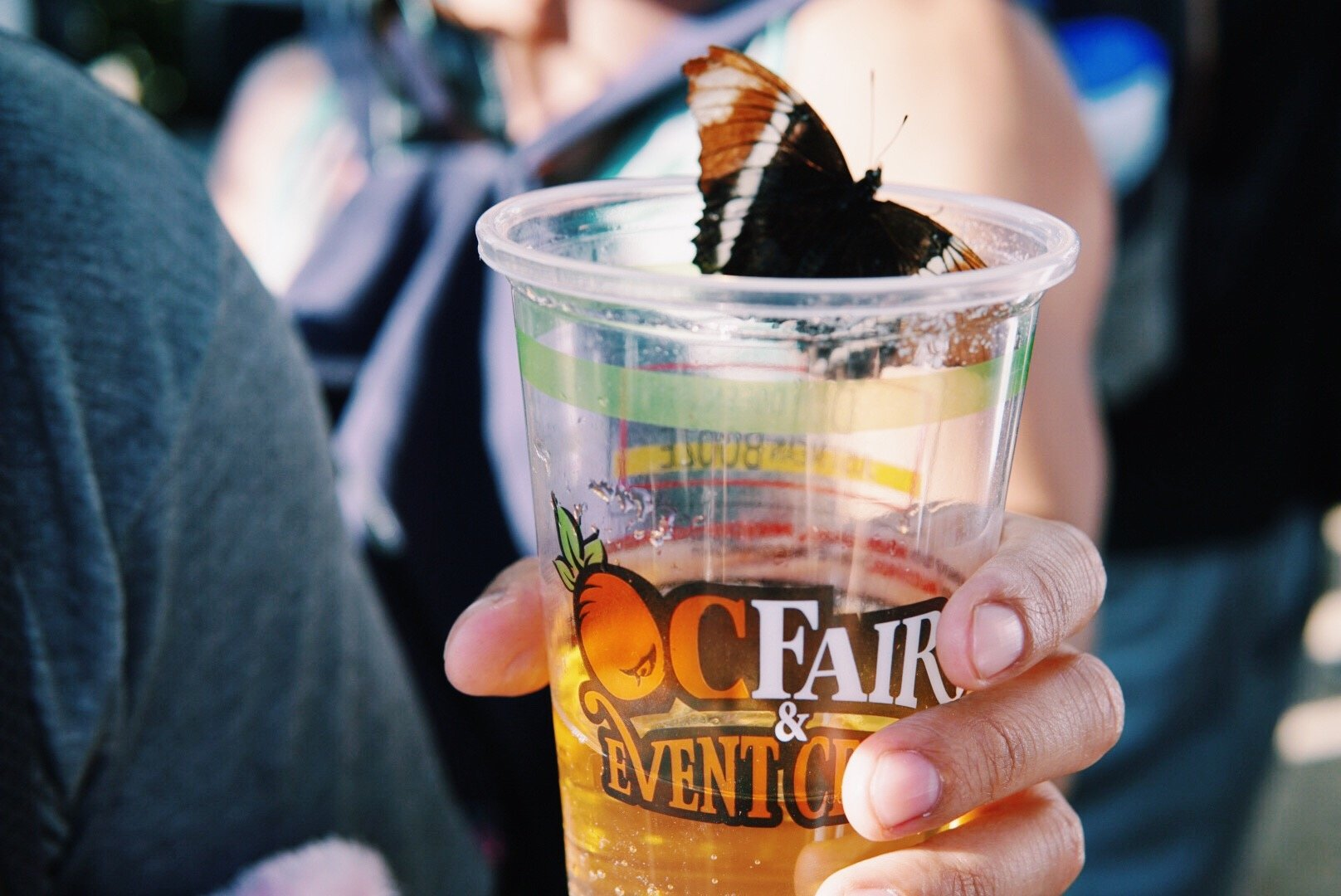 A Gallery of all the Fun & Food from This Years OC Fair Visit