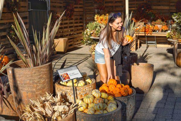 Rogers Garden Pumpkins