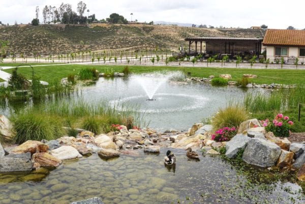 Discover Why This Temecula Winery Restaurant Will Keep You