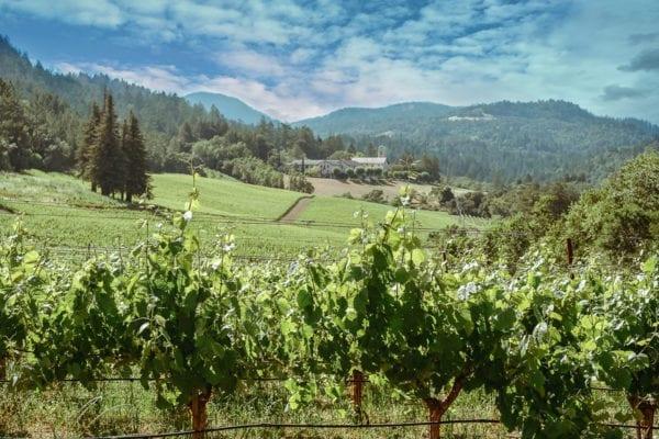 Hess Winery View