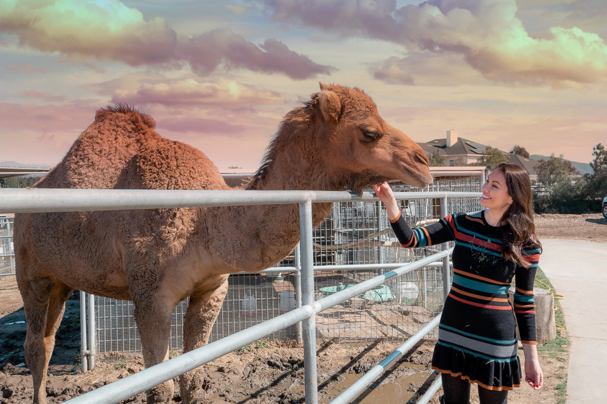 temecula-zoo-camel