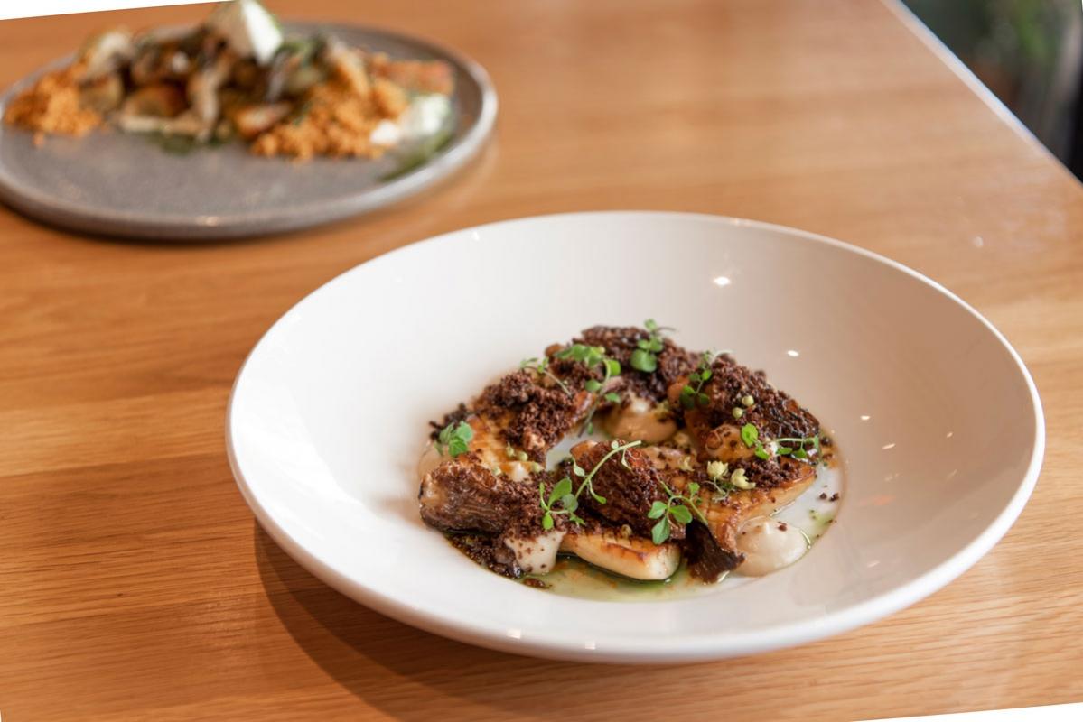 Forage-Vancouver-Morel-Mushrooms