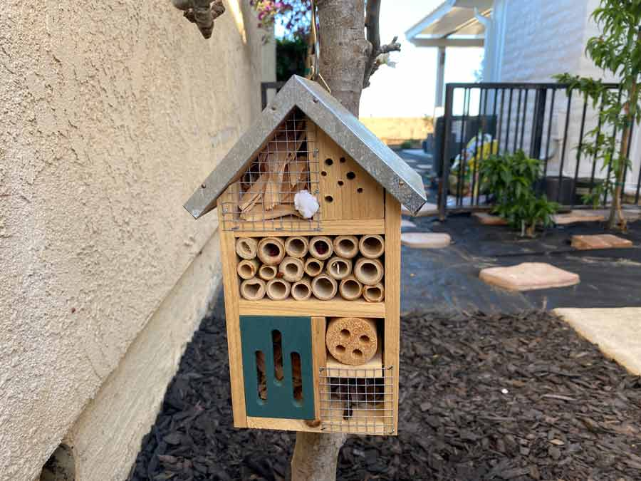 insect house for ladybugs